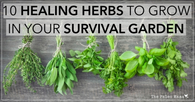 10-healing-Herbs-to-Grow-in-Your-Survival-Garden.001